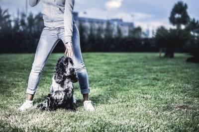 DSC_4783-400x266 Noticias de perros - Inicio