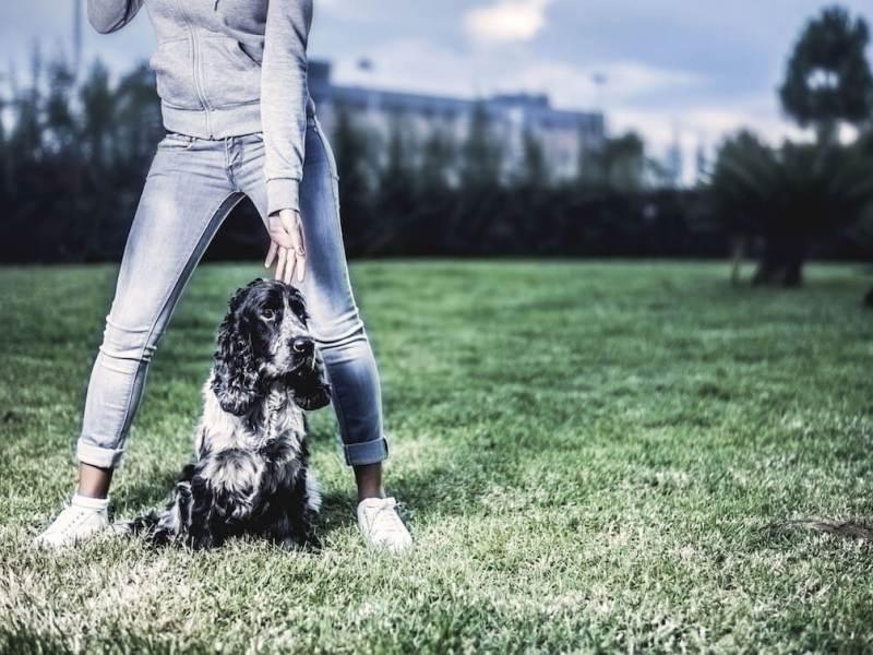 DSC_4783 Noticias de perros - Inicio