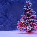 Multas por coger adornos navideños naturales