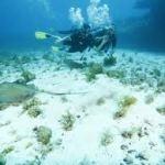 Vídeo – Viagem no fundo do mar