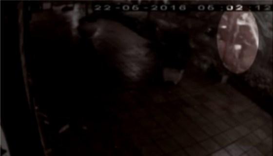 Imagens da Câmera de Segurança em Cabo Frio
