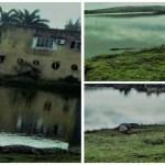REGIÃO DOS LAGOS – Jacaré surge em beira da lagoa em Búzios, se assusta e volta para a água