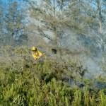 ARRAIAL DO CABO – Fogo reacende em área florestal no RJ; 10 hectares foram consumidos
