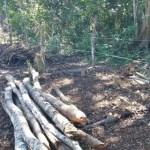 CABO FRIO – Prefeitura de Cabo Frio flagra invasão ao Centro Hípico de Tamoios