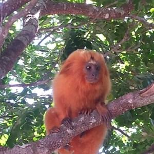 CABO FRIO – Prefeitura reassume gestão do Parque Natural Municipal do Mico Leão Dourado