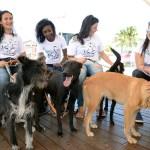 SÃO PEDRO DA ALDEIA – São Pedro da Aldeia recebe Feira de Adoção de cães e gatos neste sábado (20)