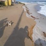 Mar com ressaca avança e 13 casas são interditadas no distrito de Figueira, em Arraial do Cabo