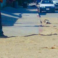 Ejecutan a Balazos a una persona en San José del Cabo
