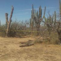 """¡Localizan a jornalero ahorcado en el monte en el rancho """"La Matanza""""!"""
