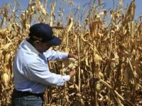 Deja 2012 afectaciones en más de 13 mil hectáreas por sequia