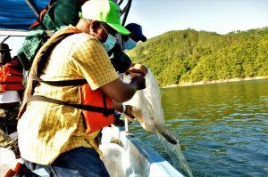 EGEHID libera 200,000 alevines de diferentes especies en la presa Jigüey