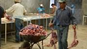 Rastros clandestinos bajan producción de ganado de matanza