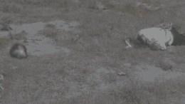 Hallan hombre degollado en Acatzingo
