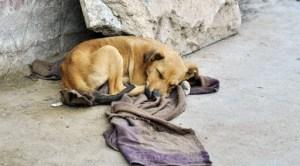 Pandemia deja sin hogar a perros