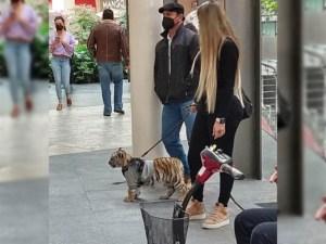 En CDMX, mujer pasea a cachorro de tigre en centro comercial