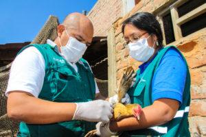 Perú es país libre de la enfermedad, declarado desde el 2005 por la OIE.