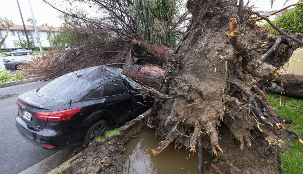 Un árbol aplasta a un automóvil fuera de una residencia en Sherman Oaks de Los Ángeles debido a una tormenta que azota el sur de California (AP)