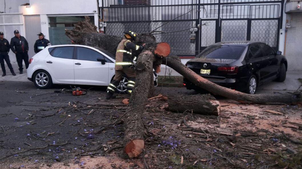 Cae árbol sobre un vehículo en la colonia Del Valle de la CDMX