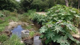 La Laguna de Valle de las Garzas es una de las reservas de mangle más grandes en Colima.