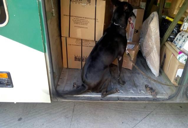Detectan heroína oculta en libros en la Central de Autobuses de Mazatlán, Sinaloa