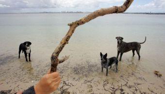 Un hombre arroga una rama a varios perros en playa de Australia.