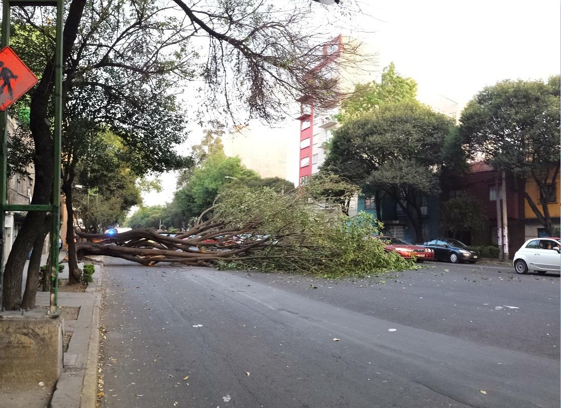 Árbol cae y daña cables eléctricos en la colonia Roma Sur; autoridades capitalinas piden reportar los árboles afectados por los vientos (NTX, archivo)