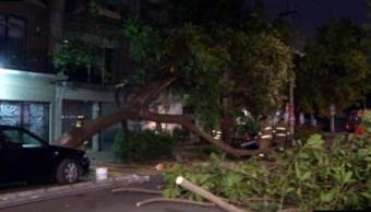 Árbol cae sobre la calle Cuernavaca de la colonia Condesa; no se reportan lesionados (Noticieros Televisa)