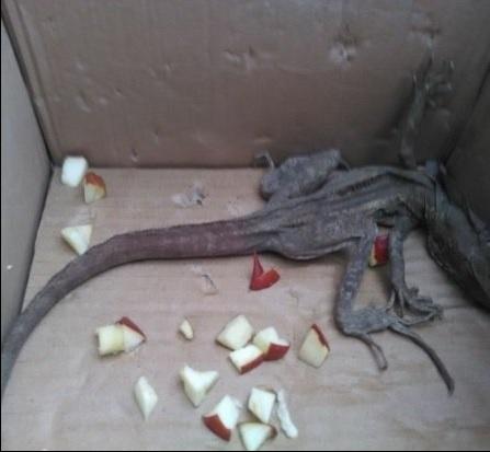 Personal de la Profepa rescata 27 especímenes de la vida silvestre en el Estado de México (Profepa)