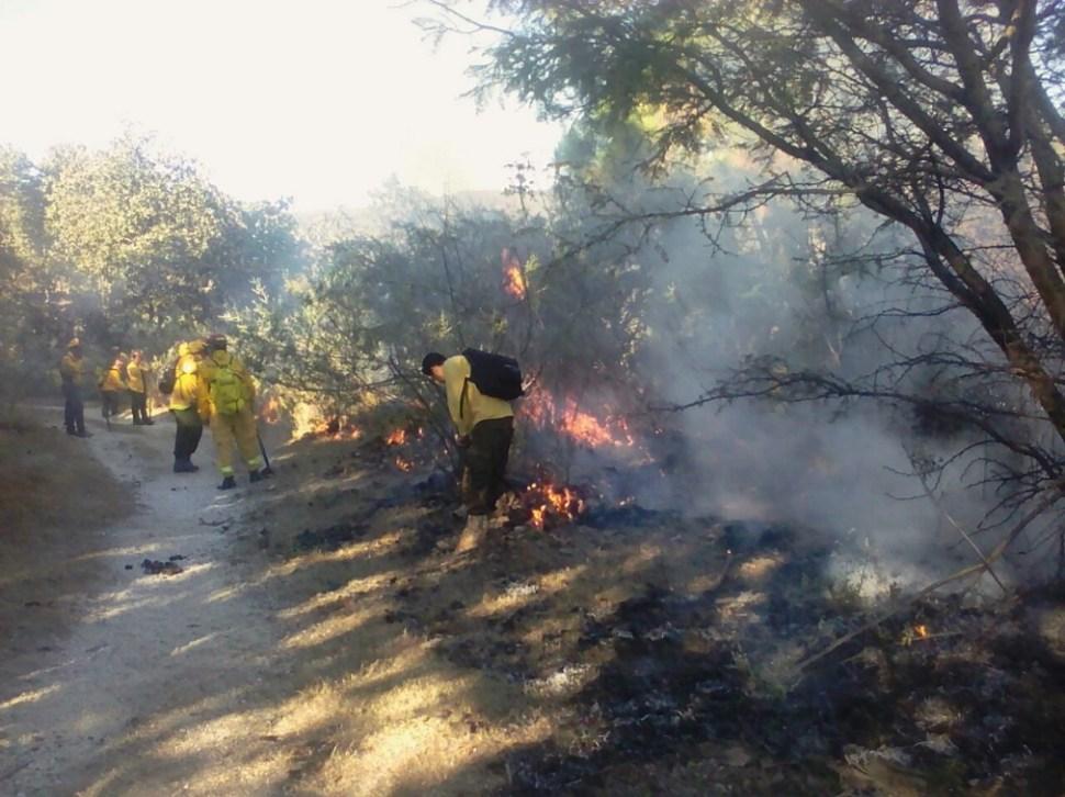 Realizan quemas controladas en el Bosque La Primavera para evitar grandes incendios; el pulmón de Guadalajara no ha sido afectado por estos incidentes (Twitter @BosquePrimavera)