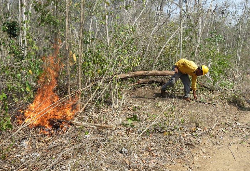En el municipio de Escárcega 20 brigadistas combaten el incendio en la comunidad El Tormento, donde el fuego ya arrasó 40 hectáreas (Twitter/@CONAFOR)