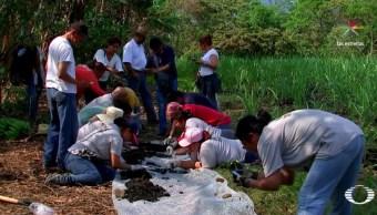 El hallazgo más reciente ocurrió en dos predios con fosas clandestinas, en la comunidad de El Arbolillo, en el municipio de Alvarado, a 10 kilómetros de la cabecera municipal (Noticieros Televisa)