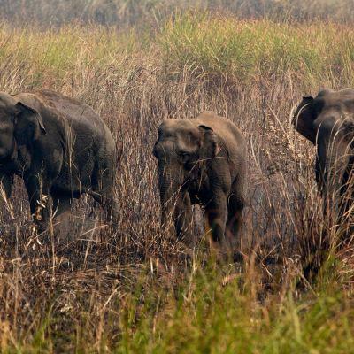 Rescatan del fango a 11 elefantes salvajes en Camboya