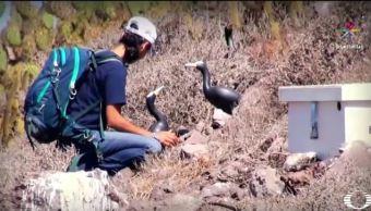 El Grupo de Ecología y Conservación imparte educación ambiental a poblaciones y niños que habitan las costas de México. (Noticieros Televisa)