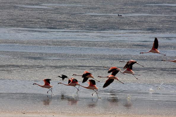 Tan sólo en la Bahía de Campeche hay 120 especies de aves, 12 de ellas en peligro de extinción. (Getty Images, archivo)