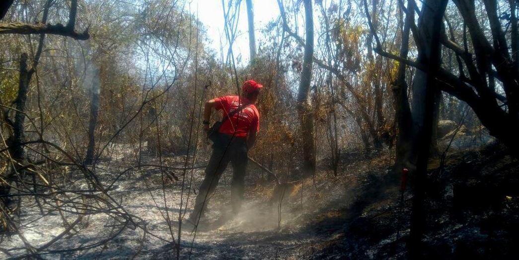 El fuego ha provocado el desplazamiento de la fauna silvestre y cada vez los incendios se acercan más a las zonas pobladas (Twitter/@PC_Guerrero)