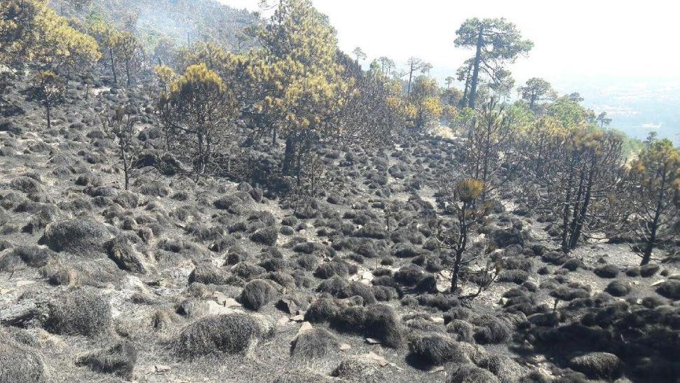 Aspectos del incendio en la zona del Ajusco. (Twitter @Conafor)