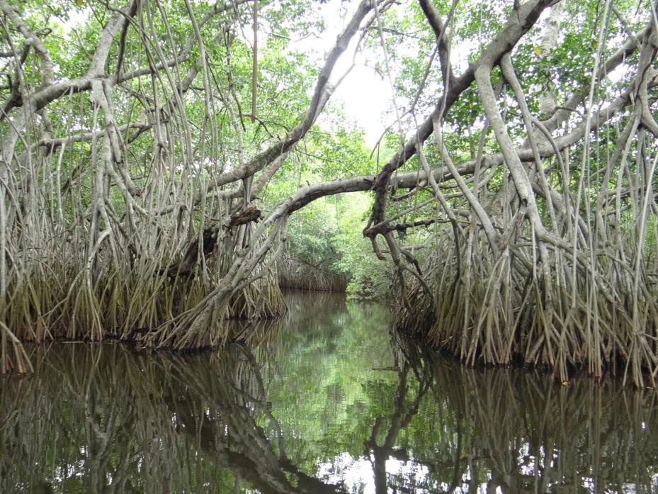 Reserva de La Encrucijada, localizada en Chiapas; un joven muere por ataque de cocodrilo en esta zona (Conanp)