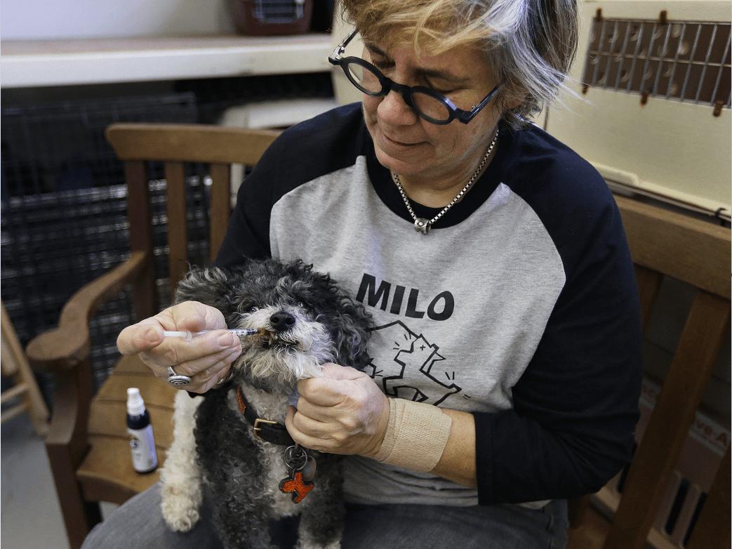 Lynne Tingle, que tiene un centro de adopción de animales, da comestibles y pomadas a base de cannabis a los perros mayores con problemas de salud o de comportamiento. (AP)