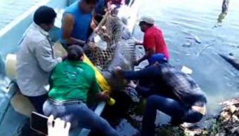Rescatan a manatí en Laguna de las Ilusiones, Tabasco