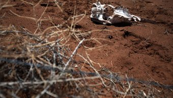 En condiciones de sequía extrema, 75% de los municipios de Sonora