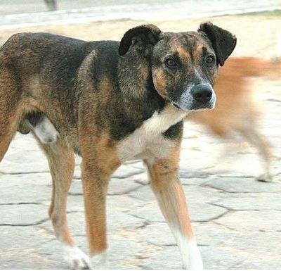 Diputada de Morena propone eliminar a perros callejeros