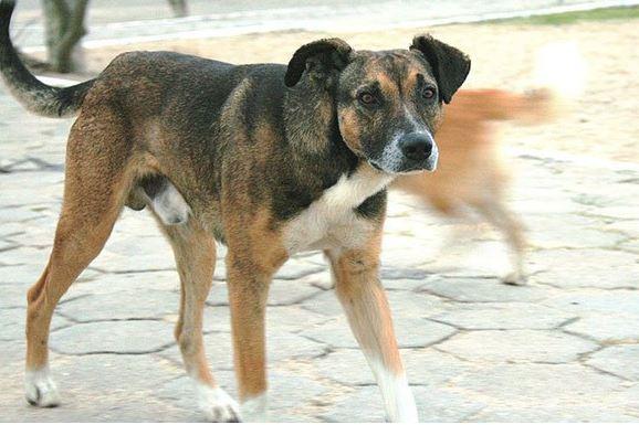 La Secretaría de Salud señaló que entre 2008 y 2010 se sacrificaron en promedio entre 600 mil y 800 mil perros al año. (@AntonioAcuaPani)