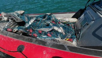 La totoaba es un pez endémico del Alto Golfo de California