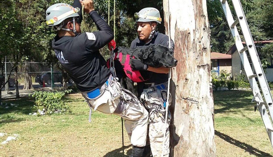 Policías de la Brigada de Vigilancia Animal de la SSPCDMX (Twitter @SSP_CDMX)