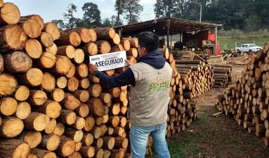 Clausuran un aserradero y aseguran 61.6 metros cúbicos de madera en Hidalgo. (Profepa)