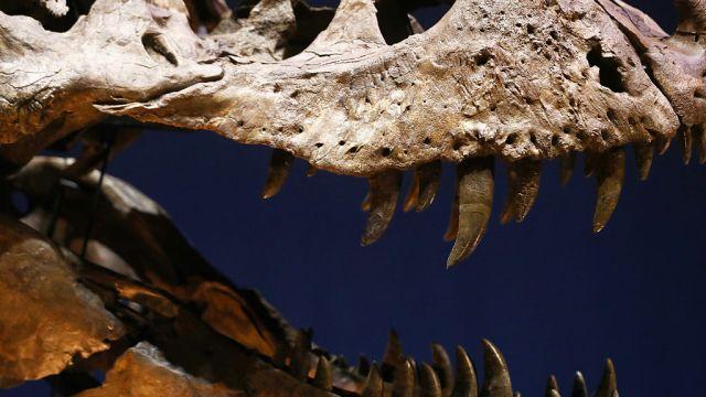 Según los científicos, los dinosaurios, y otras especies de animales y plantas, se extinguieron hace unos 65 millones de años.