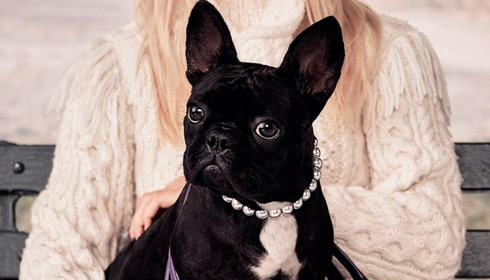 Un bulldog francés con un collar de perlas.