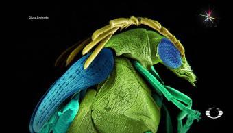 Arte, microscópico, escarabajos, fotografía, Silvia Andrade, Fotografía