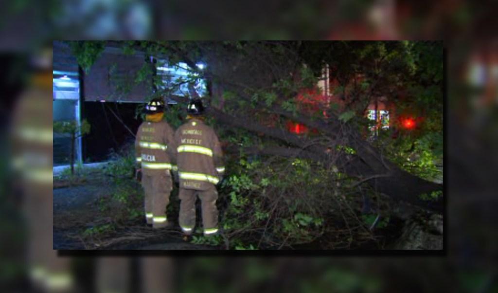 Bomberos retiran árbol caído en calles de la colonia Roma, CDMX (Noticieros Televisa)