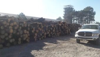 Profepa asegura madera en San Juanito, Chihuahua; los dueños no pudieron acreditar la procedencia legal de la materia prima (Profepa)